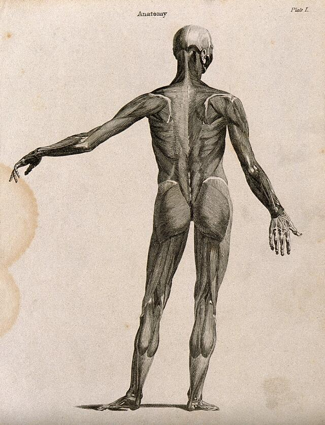 Anatomy And Physiology Catalogue Search Wellcome Collection
