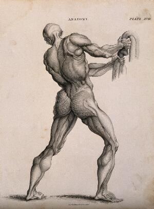 view An écorché pulling down on a rope (?), seen from the back. Line engraving by Kirkwood & Sons, after W. Cowper, 1813.