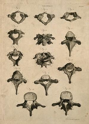 view Vertebrae: thirteen figures. Line engraving by A. Bell, 1798.