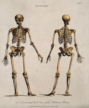 view Human skeleton: front and back views. Coloured line engraving by J. Pass, 1796.