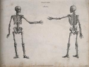 view Human skeleton with left arm extended: front and back views. Line engraving by Heath, after Walker, 1806.