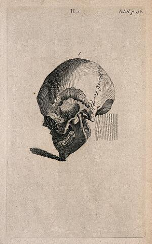 view Human skull with chin tilted downward: Line engraving, 1780/1800?