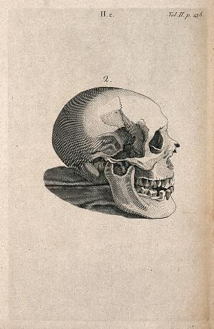 view Human skull: side view. Line engraving, 1780/1800?