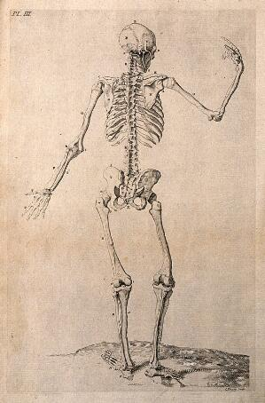 view A skeleton with right hand raised, seen from behind. Line engraving by J. Tinney, after W. Cowper, 1743.
