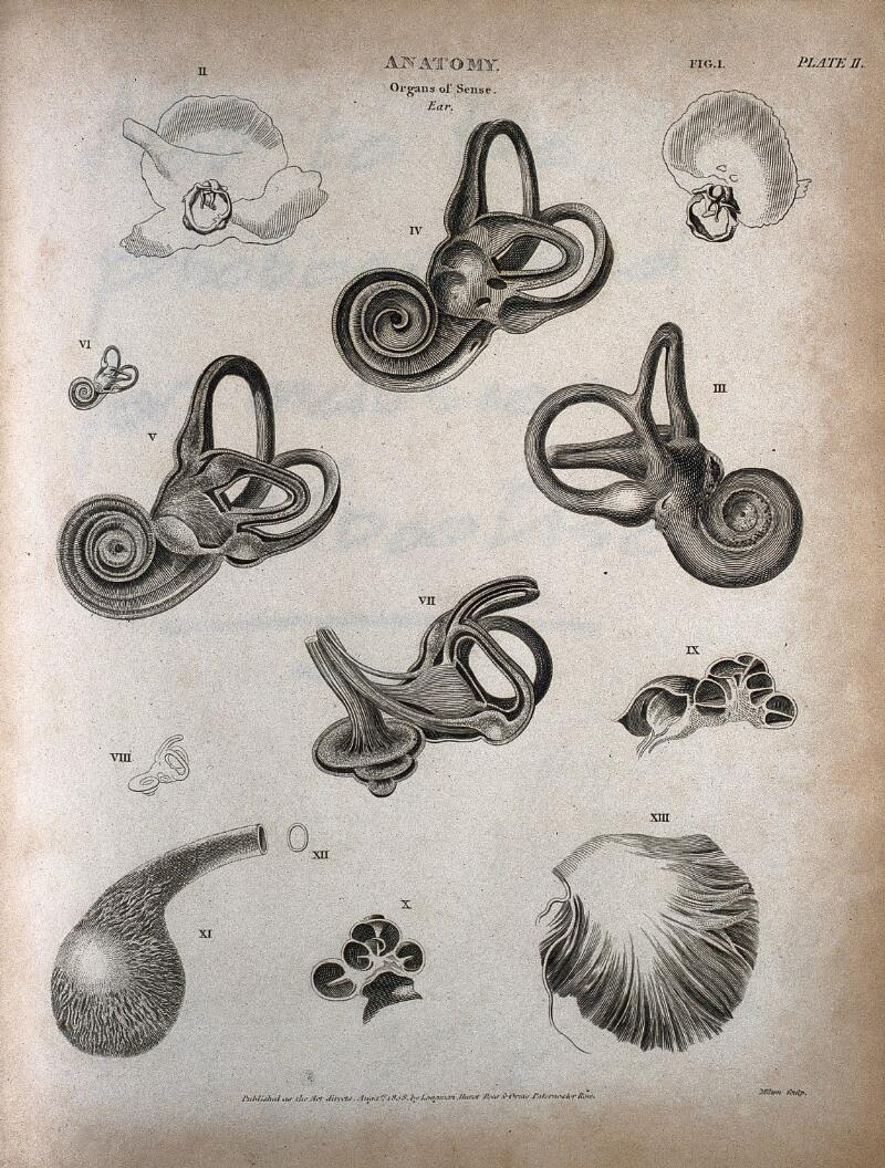 The Human Ear Thirteen Figures Showing The Anatomy Of The Inner Ear