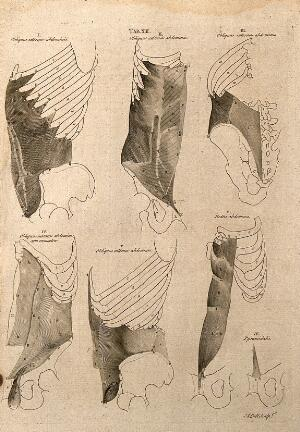 view Muscles around the ribcage and pelvis: 7 figures. Line engraving by A. Bell after B.S. Albinus, 1777.