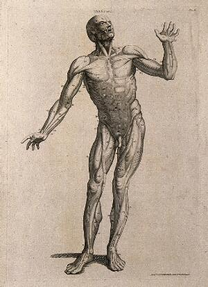 view A man, écorché, in the pose of an orator: anterior view. Line engraving by A. Bell after W. Cowper, 1798.