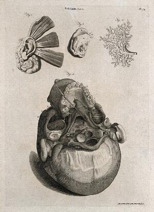 view Parts of the ear (above) and the base of the skull showing the ear canal (below). Line engraving by A. Bell after W. Cowper and G. Bidloo, 1798.