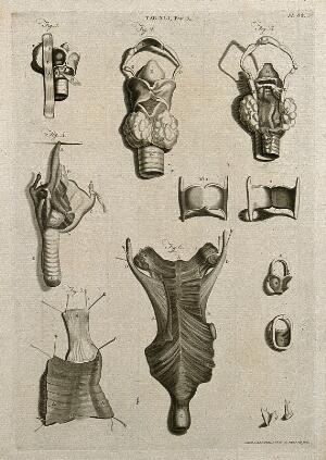 view The larynx, trachea, thyroid gland and related parts of the throat: six figures and six lesser figures. Line engraving by A. Bell after W. Cowper and G. Bidloo, 1798.