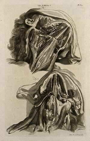 view Muscles of the lower jaw: (above) superficial, (below) deep. Line engraving by A. Bell after G. Bidloo, 1798.