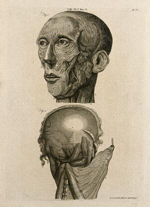 view Muscles of the head: two figures. Line engraving by A. Bell after W. Cowper, 1798.