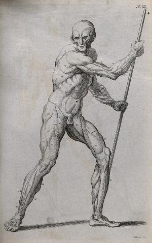 view An écorché figure holding a spear, with left leg bent, seen from the right side. Line engraving by J. Tinney, 1743, after W. Cowper.