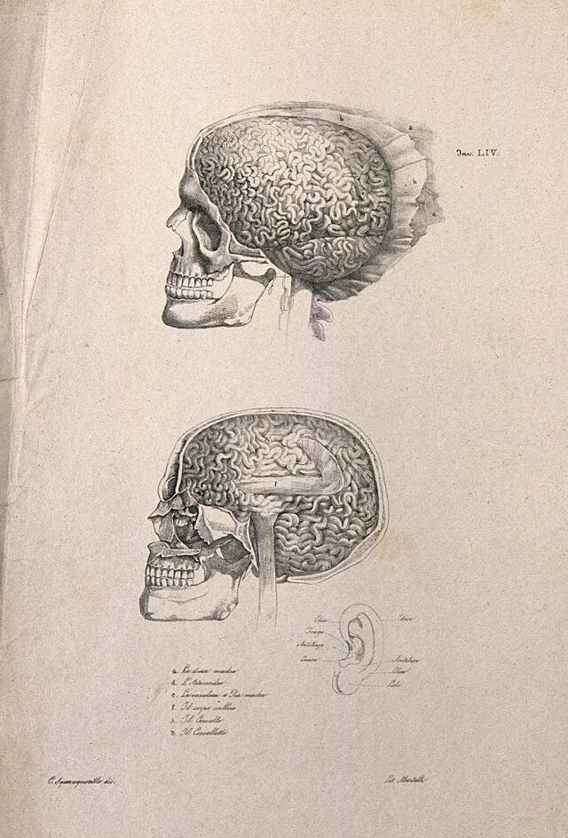Image Catalogue Search Ear Wellcome Collection