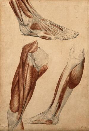 view Muscles of the leg and foot: three figures. Red chalk and pencil drawing by A. Durelli, ca. 1837.