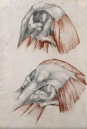 view Muscles, tendons and bones of the knee-joint: two figures. Red chalk and pencil drawing by or associated with A. Durelli, ca. 1837.