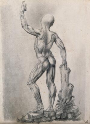view An écorché figure with left arm raised, leaning on a tree stump, seen from the back. Pencil drawing by or associated with A. Durelli, ca. 1837.