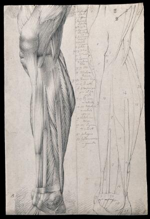 view Muscles and tendons of the lower leg and foot, seen from the side: two figures showing both stylised outline and detailed drawing. Pencil drawing by or associated with A. Durelli, ca. 1837.