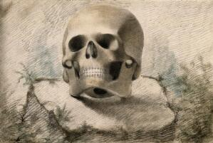 view Skull, resting on a tree-stump. Coloured chalk drawing, 18--(?).