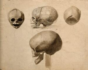 view Skulls: four figures. Pen and ink wash drawing by C. Landseer(?), or a contemporary, ca. 1812.