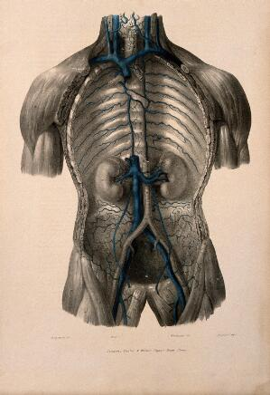 view Dissection of the thorax showing the vena cava and azygos vein. Coloured lithograph by William Fairland, 1837, after J. Walsh after W.J.E. Wilson.