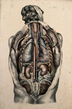 view The body of a man seen from behind with the trunk dissected to reveal the ribs and viscera. Coloured lithograph by William Fairland, 1869.