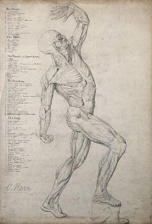 view Male écorché figure, side view, with one arm raised above its head. Pen and ink drawing by C. Kerr, 1874.
