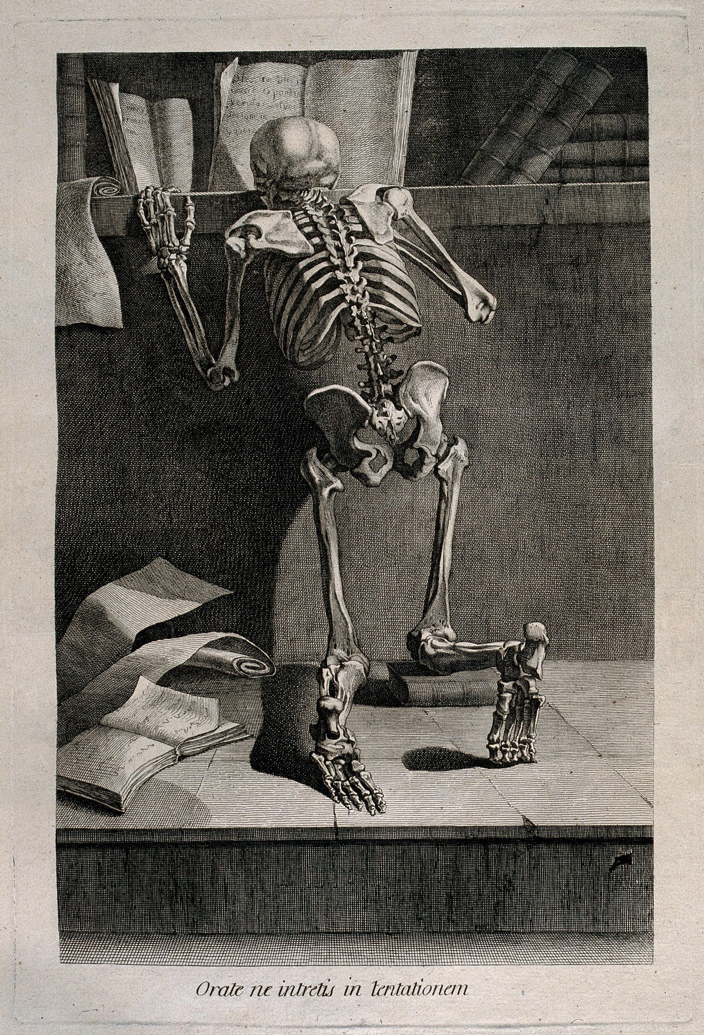 A kneeling skeleton, seen from behind, reading a book on a ...