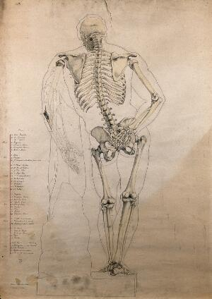 view The Farnese Hercules: skeleton and body contour, rear view. Pen and ink drawing with watercolour, by H.J. Arundel Miles, 1862.