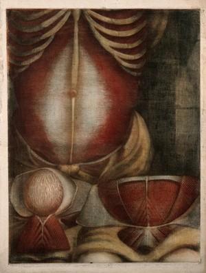 view Muscles of the abdomen: three écorchés figures. Colour mezzotint by J. F. Gautier d'Agoty after himself, 1745/1746.