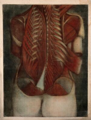 view Muscles of the back: partial dissection of a female figure, showing the bones and muscles of the back and shoulders. Colour mezzotint by J. F. Gautier d'Agoty after himself, 1745/1746.