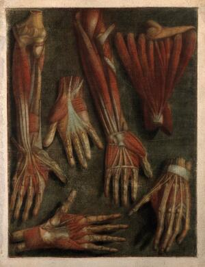 view Muscles of the hand and arm: six écorchés. Colour mezzotint by J. F. Gautier d'Agoty after himself, 1745/1746.