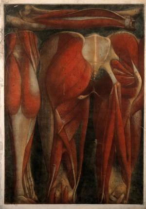 view Muscles of the pelvis and leg: two écorchés, rear view. Colour mezzotint by J. F. Gautier d'Agoty after himself, 1745/1746.