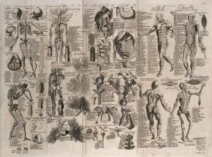view Anatomical figures: includes écorché figures, details of the skeleton, the circulatory system, internal and reproductive organs. Engraving by E. Rooker, 1740/1770?