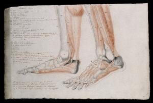 view Bones and muscles of the feet and lower legs. Pencil and crayon drawing by J.C. Zeller after J.G. Salvage, 1833.