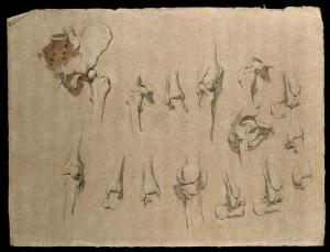 view Bones of the pelvis, hip and knee joints. Pencil and red chalk drawing by J.C. Zeller, ca. 1833?