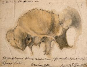 view Bones of the cheek: side view of the temporal, schenoid and malar bones. Pencil and watercolour drawing by J.C. Whishaw, 1852.
