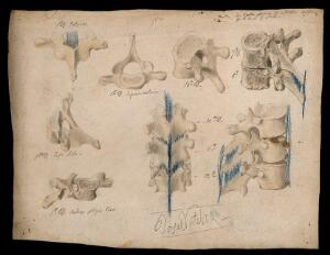 view Dorsal vertebrae: eight figures. Watercolour, pencil and crayon drawing by J.C. Whishaw, ca. 1853.