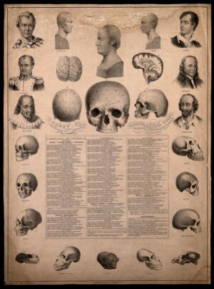 view Phrenological chart with portraits of historical figures and illustrations of skulls exhibiting racial characteristics. Lithograph by G. E. Madeley, authored by C. Donovan, c. 1850.