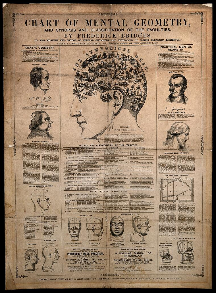 phrenological chart  with design of head containing