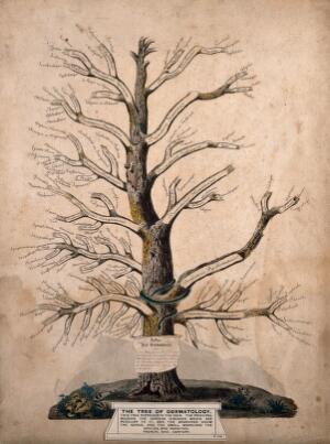 Family Trees Catalogue Search Wellcome Collection