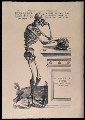 view A skeleton, contemplating a skull: lateral view. Photolithograph, 1940, after a woodcut, 1543.