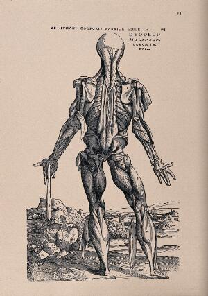 view Muscleman, in a landscape, seen from behind. Photolithograph, 1940, after a woodcut, 1543.