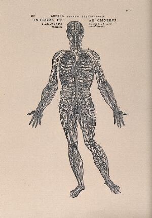 view The human venous system. Photolithograph, 1940, after a woodcut, 1543.