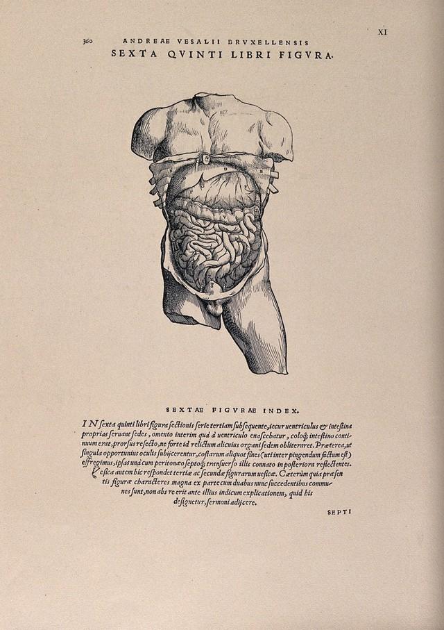 Collections search: De arte natandi libri duo | Wellcome Collection