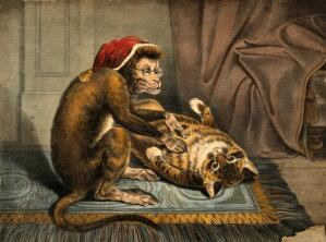 view A monkey physician examining a cat patient for fleas. Coloured lithograph.