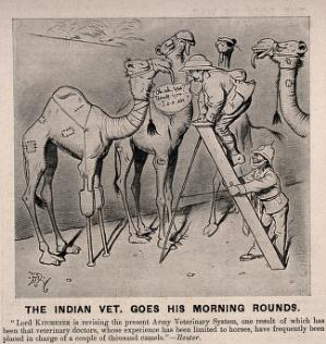 view Two army veterinarians, one up a ladder examining one of four camels which has artificial front legs. Wood engraving by E.T. Reed, 1906.