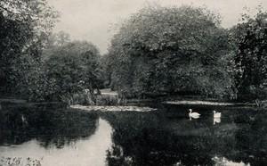 view Royal Botanic Gardens, Kew, Surrey. Process print.