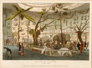 view Bullock's Museum, (Egyptian Hall or London Museum), Piccadilly: the interior. Coloured aquatint, 1810.