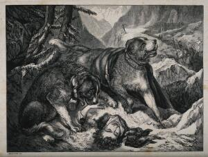 view Two St. Bernard dogs find an injured man, while one tries to revive him the other alerts the rescue party of his presence. Wood engraving by Baxter after E. Landseer.