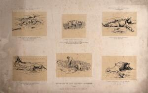 view A sheet of sketches showing war defences and victims during the Chinese Campaign, 1860, China. Tinted lithograph after Lt. Col. Crealock, 1860.